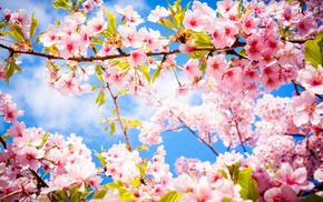 bloom, sakura, stunner, sky, spring