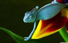 животные, природа, рептилия