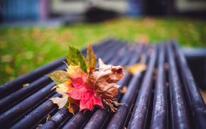 autumn, motion blur, macro, mood, leaves