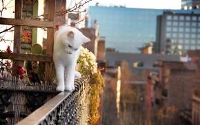 белый, растения, кот, глубина резкости
