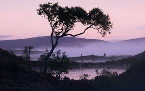 озеро, туман, природа, деревья