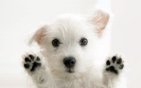 puppies, animals, white, dog