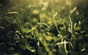 grass, macro