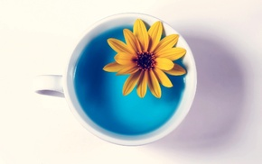 white background, cup, stunner, flower, water