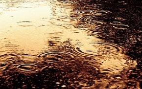drops, water, rain, macro