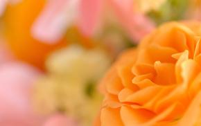 bokeh, flower, macro, petals