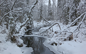 trees, winter, forest, creek