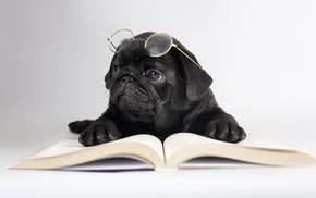 glasses, animals, book, dog