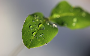 water, gray, macro, drops, green