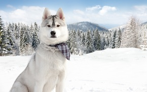 snow, nature, winter, animals
