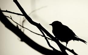 птицы, силуэт, монохром, минимализм, ветка