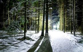 деревья, зима, свет, снег, тень