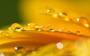 drops, orange, flower, highlights, stunner