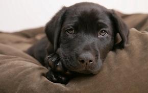 собака, щенки, животные