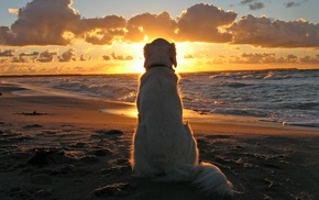 animals, dog, sunset, beach