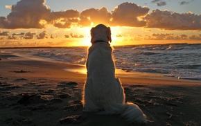 животные, собака, закат, пляж