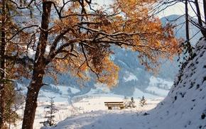 winter, snow, tree