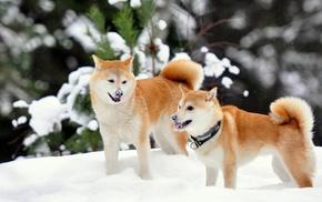 animals, winter, snow