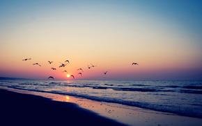 sea, nature, sunset, birds