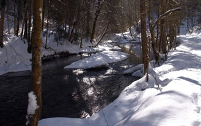trees, creek, snow, winter, forest