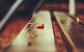 bench, macro, depth of field, leaves, nature