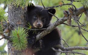 animals, tree, cones, bear