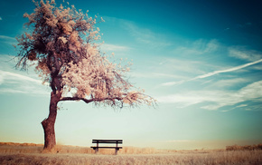 tree, summer, stunner, bench, clouds