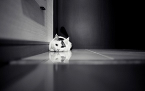 black and white, door, animals, cat