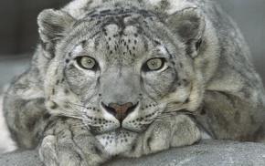 animals, stones, nature, gray eyes