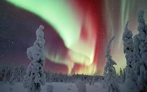 winter, snow, night, trees, landscape