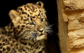 mustache, wallpaper, muzzle, background, leopard
