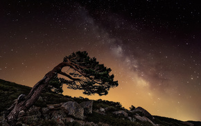 nature, tree, stars, night, rocks