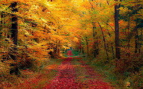 forest, autumn, road, nature