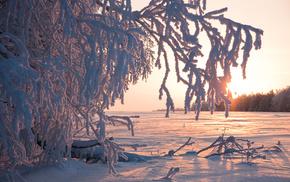 trees, Sun, winter, snow, nature