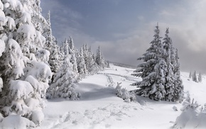 snow, Christmas tree, winter, nature