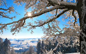 winter, tree, twigs, Sun, mountain