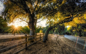 road, HDR, trees, sunset, fence, nature