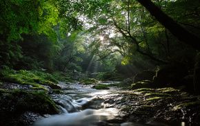 Sun, forest, light, river, nature