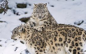 snow, winter, kitten, animals