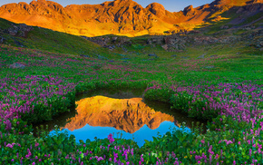 nature, flowers, reflection, mountain