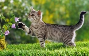 grass, flowers, cat, animals