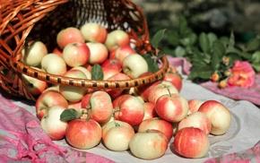 basket, apples, wallpaper, widescreen, food