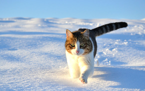 winter, animals, snow, cat