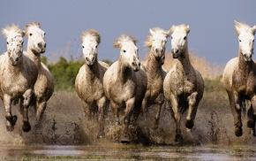лошадь, животные, природа