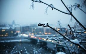 branch, city, winter, snow