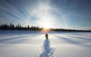 лес, снег, зима, пейзаж