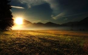 mist, field, nature, grass, sunrise, morning