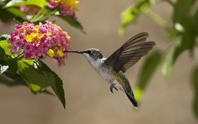 animals, leaves, flowers, bird