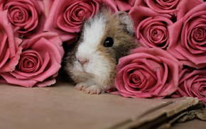 animals, flowers, roses