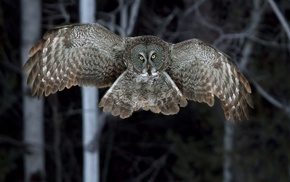 animals, night, forest, owl, birds